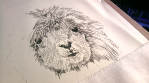An in progress picture of my Lama drawing