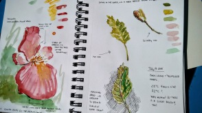Studies on found flowers and leaves