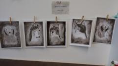 Charcoal animal portraits
