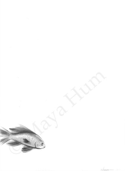 Hi Hi - Graphite and Acrylic on Mylar, 2011