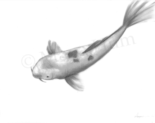 Koi - Graphite and Acrylic on Mylar, 2011