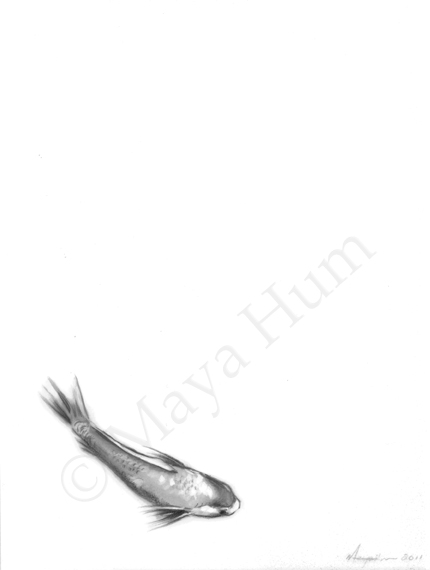 Swim - Graphite and Acrylic on Mylar, 2011